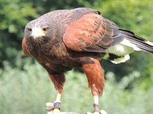 Bird of Prey Experience 2014-09-04 158