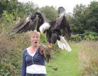 Bird of Prey Experience 2014-09-04 212