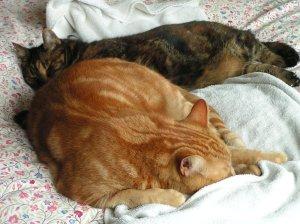 Tiggy & Septimus
