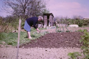 Nana working on the allotment