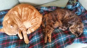 Septimus and Tiggy