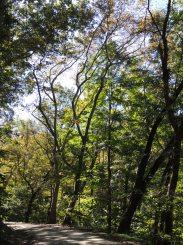 Schenley Park paths