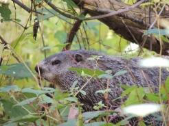 Groundhog 2