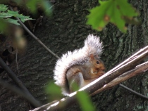 Squirrel Focus