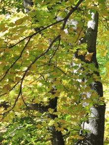 Schenley Park foliage