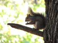 Pittsburgh Squirrel