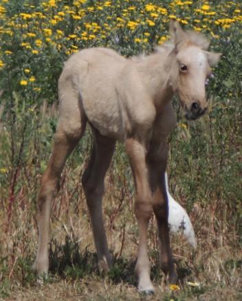 Easter Foal