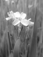 Monochrome Meadow