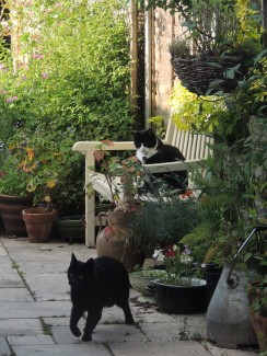 Parkfield cats