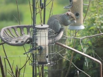 Squirrel antics