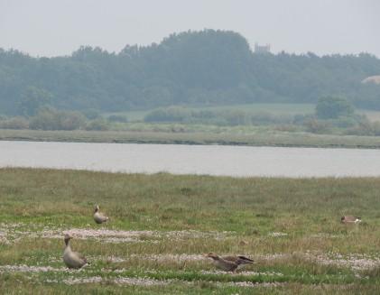 Wivenhoe in distance