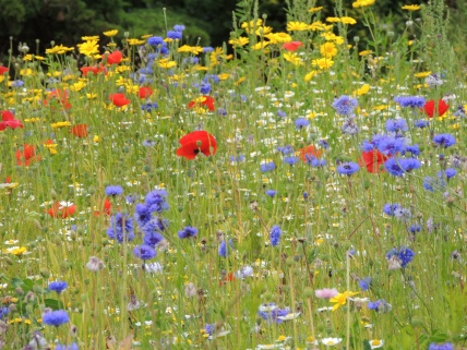 English flower meadow