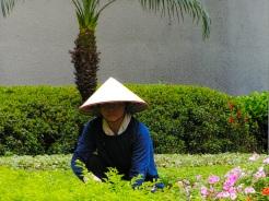 Hong Kong gardener