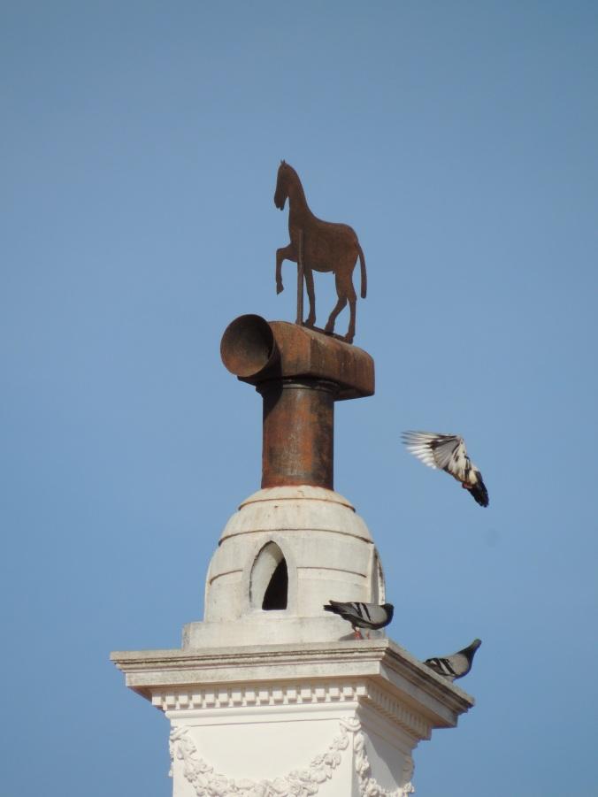 Pigeon Acrobats
