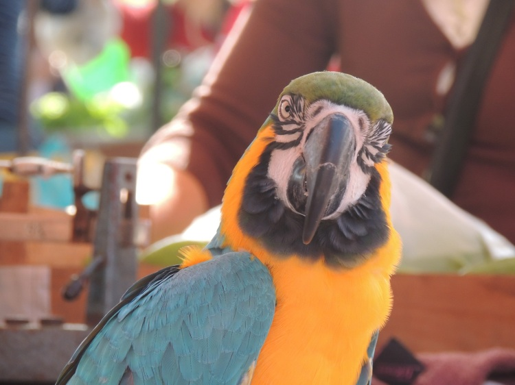 Parrot stopping for a few nuts in the market