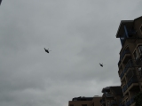 helicopters-overhead