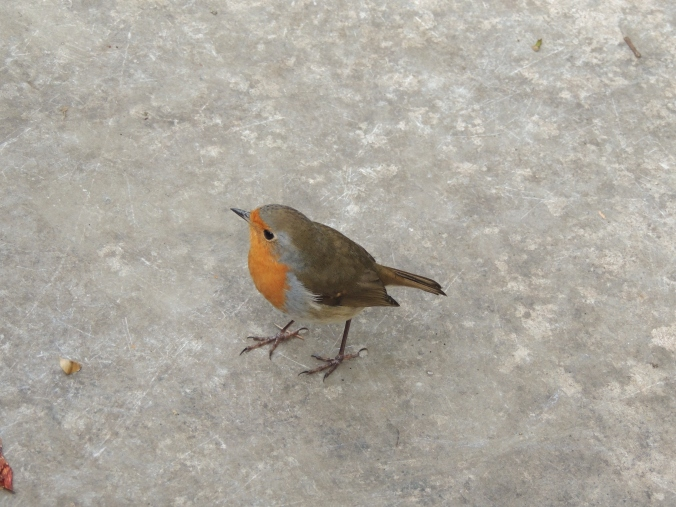 robin-at-hillier-gardens