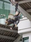 the-monkey