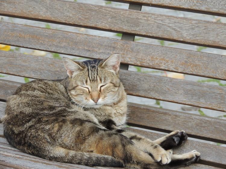 Taviria cat