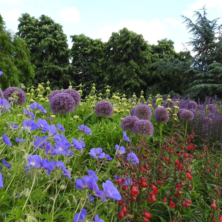 A glimpse of the herbaceous border