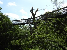 Damaged canopy