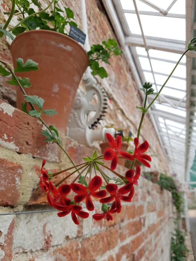 Stourhead Greenhouse