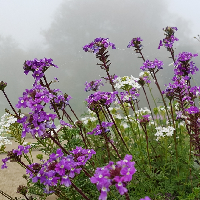 Flowers in the mist