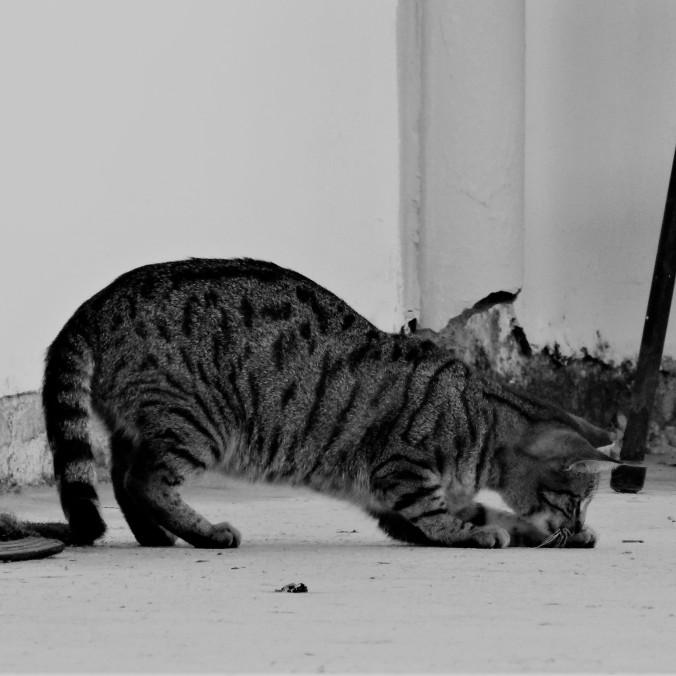 Cat in the Algarve