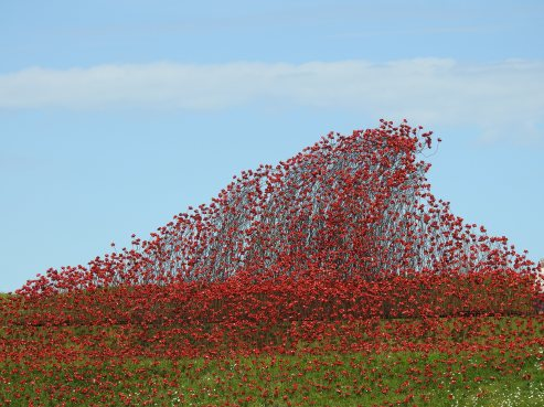 Over 5000 poppies