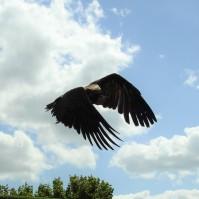 Wingback!
