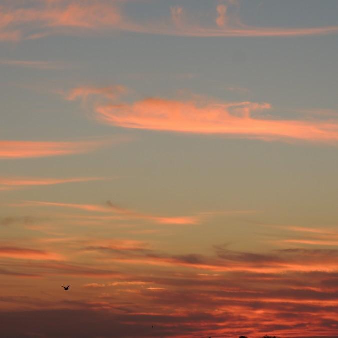 Algarve Sunsets