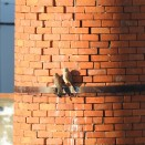Pointy beaks, sharp talons and jagged bricks