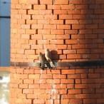 Pointy beaks, sharp talons and jagged bricks