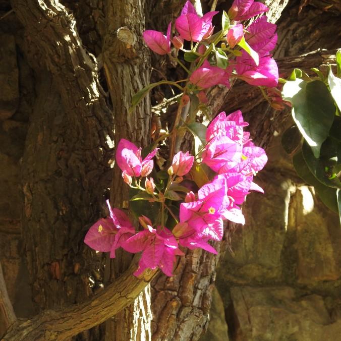 Sunday pink