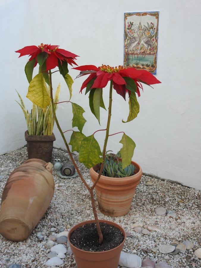 A corner of Jo's garden
