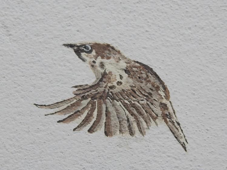 Wall Sparrow
