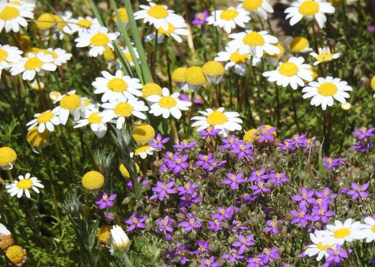 Algarve in spring
