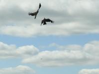 Kites above
