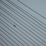 Osprey above or below diagonal lines