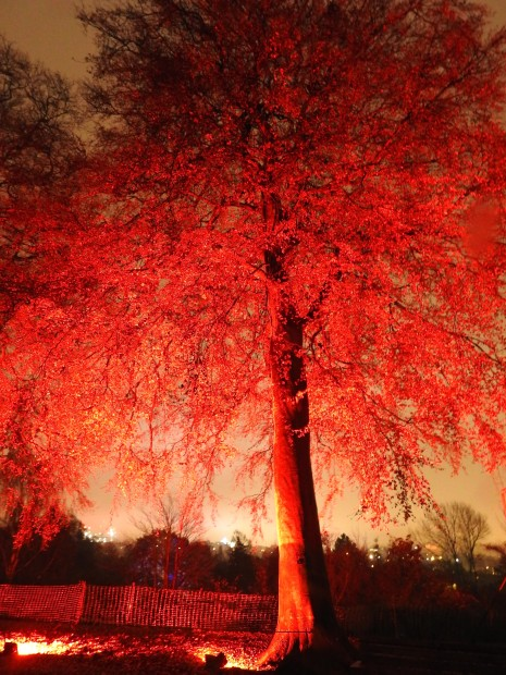 Red trees at night