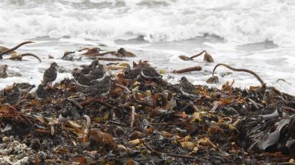 Hidden in the seaweed