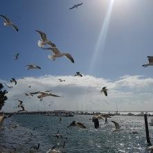 Multiple flight in sunlight