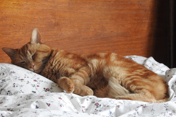 Septimus in bed